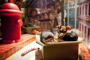 Adopt me says the little puppy in the Macy's San Francisco store window