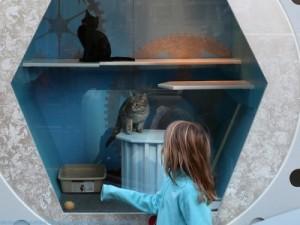 pet-window-display